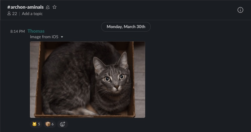 """A screenshot of our """"aminals"""" channel and the very complex content we post within. (Spoiler: it's pet pictures)"""